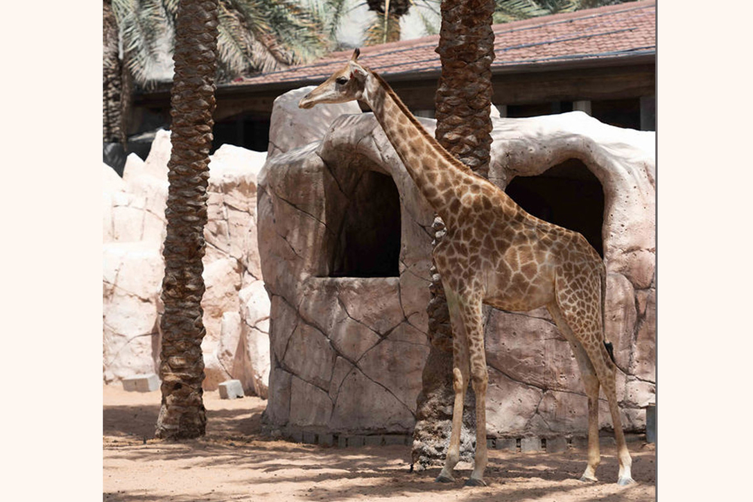 In Pictures: DZ Design renovates Emirates Park Zoo